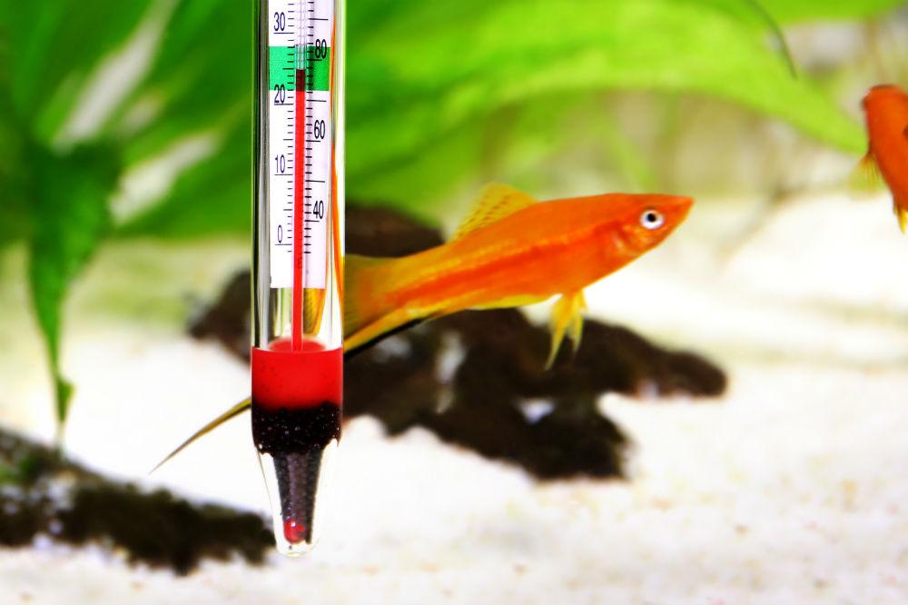 Best aquarium thermometer review aquarist club for Aquarium thermometer