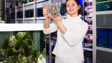 Best Fish Aquarium