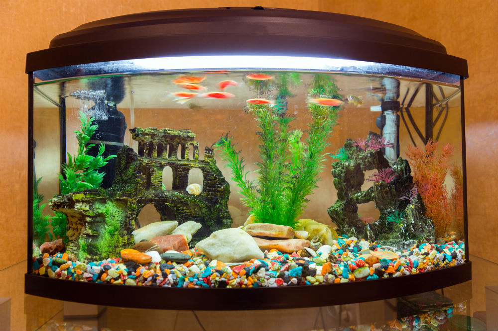 Best fish tank background review aquarist club for Best fish tanks