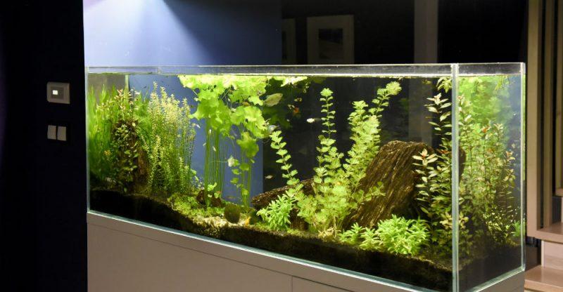How Do I Keep My Fish Tank Clean