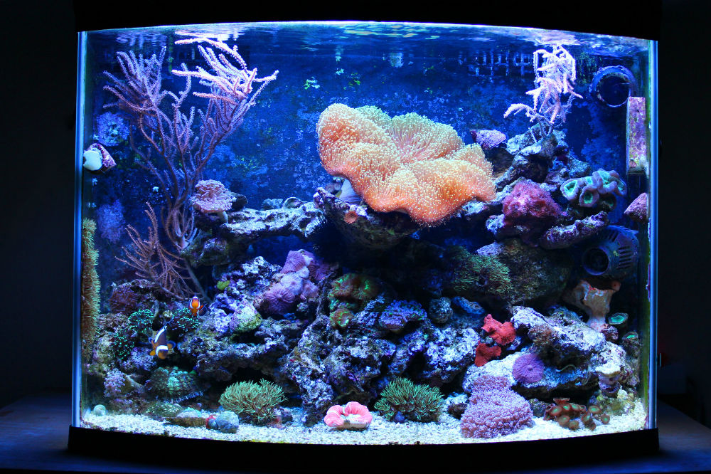 how often do you have to clean a fish tank aquarist club