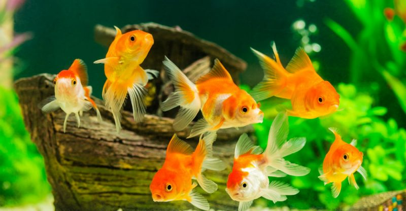 How to Change Fish Tank Water Without Killing Your Fish