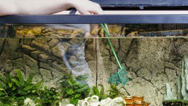 Is Aquarium Glass Tempered