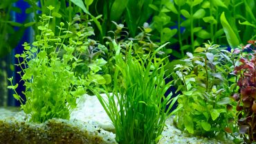 The Best Aquarium Plants