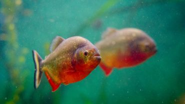 how to reduce ammonia in fish tank