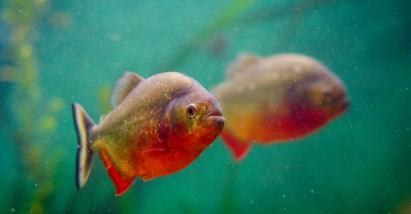 how to reduce ammonia in fish tank