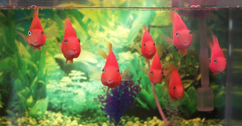 best led fish tank lights